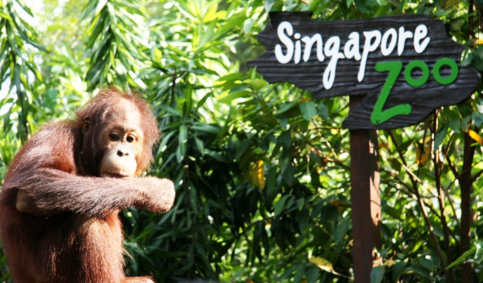 Singapore Zoo in Singapore