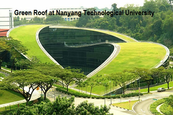 Green Roof at Nanyang Technological University